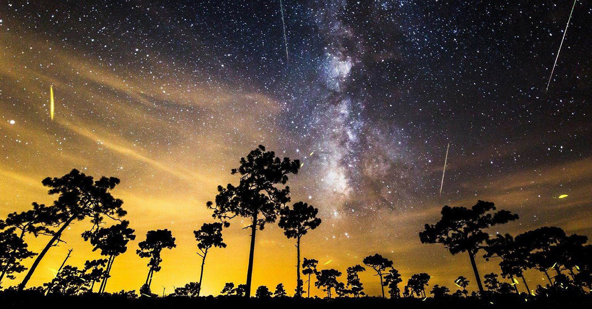 Night Sky With Star Trails at Kissimmee Prairie Preserve State Park in Florida